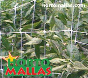 sistema di tutorato utilizzato per fornire supporto alle colture