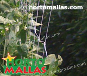 sistema di supporto verticale installato sul campo di coltura